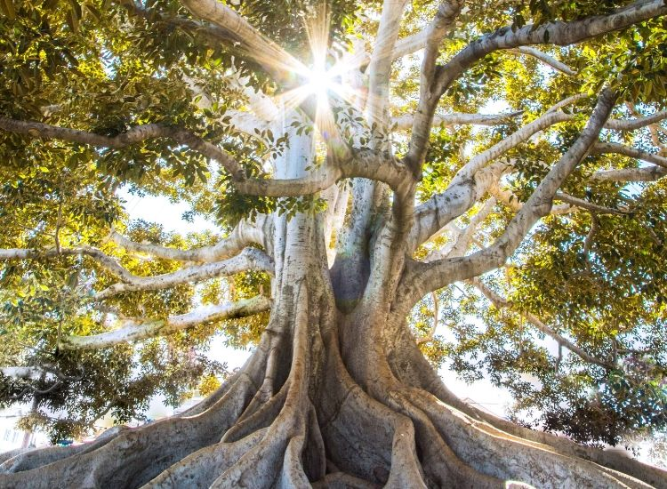Kundalini Yogo and the new spirituality (1)